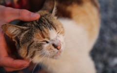Cosy cat.