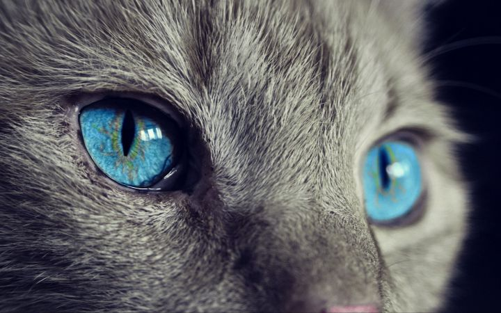 Beyond Certainty - Cat
