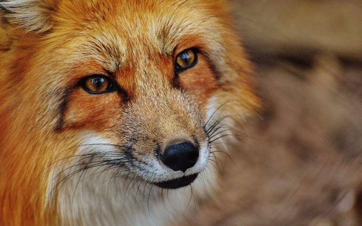 Beyond Certainty - Fox